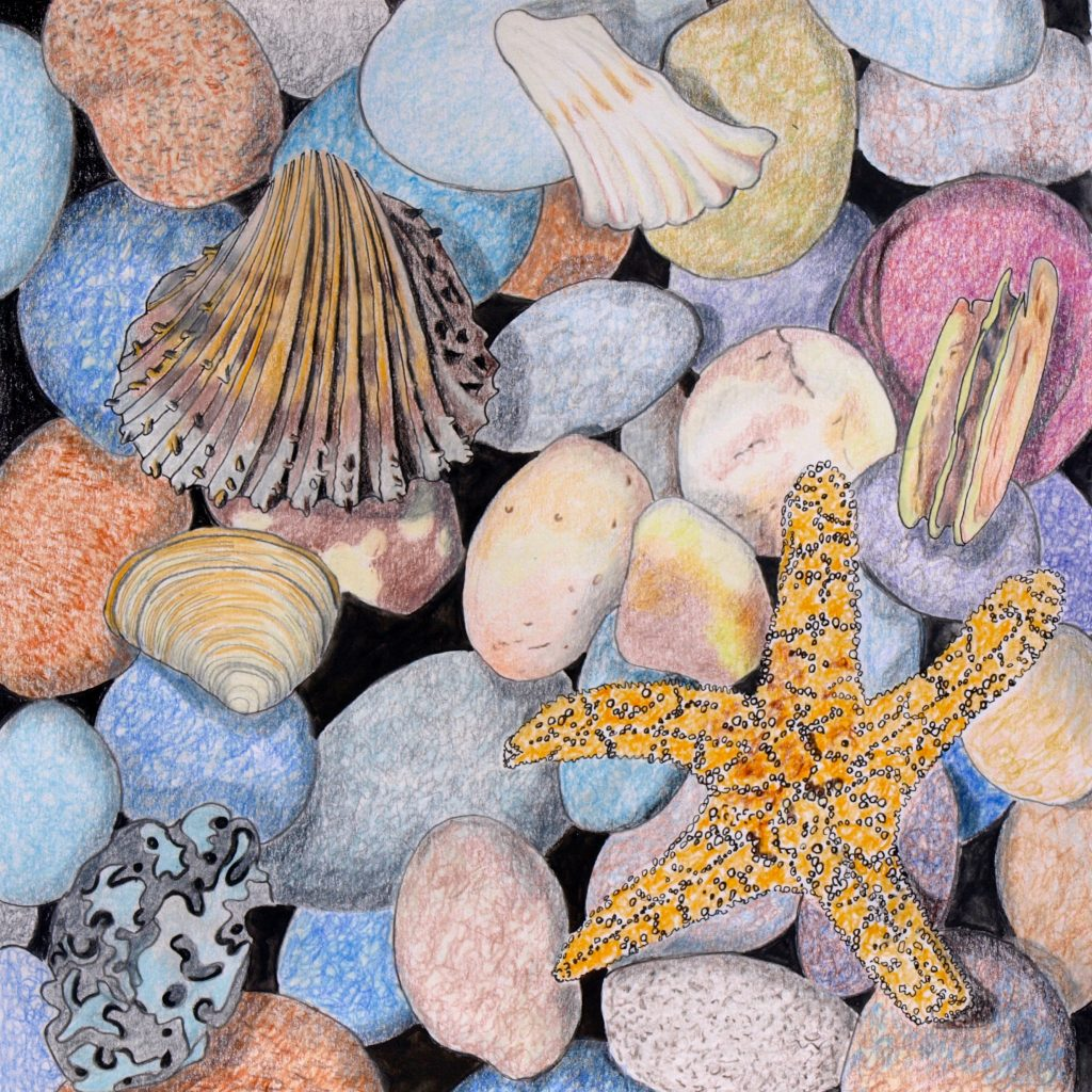 Beach Shingle with Starfish